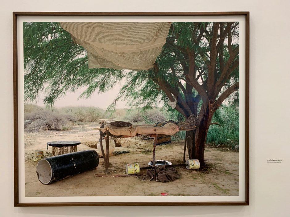 """""""Quelque part dans le désert"""" Ron Amir"""